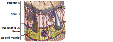Implanted User Interfaces: Illustration of skin layers